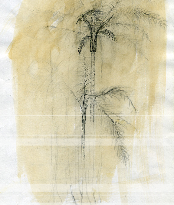 Brazilian Palmtrees, Traditional Travel Sketches