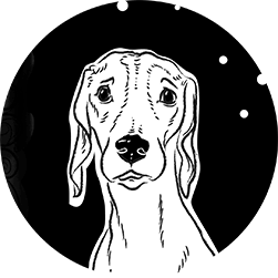 Animal Vector Portraits